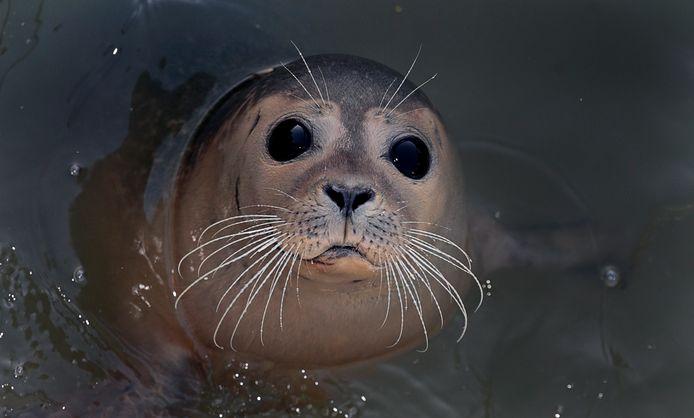 Een zeehondenpup bij A Seal.