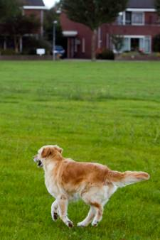 De hond uitlaten? Op dit kaartje zie je waar dat mag