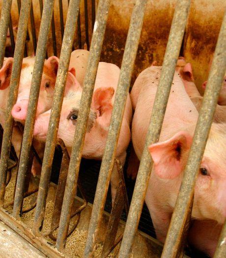 Bientôt un référendum contre la maltraitance animale en France?