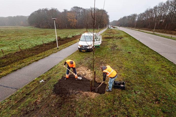 Langs de weg bij landgoed Mattemburgh in Hoogerheide zijn 45 nieuwe bomen geplant: lindes, esdoorns en wilde kers, ter vervanging van jonge eiken die stierven door droogte en hitte.