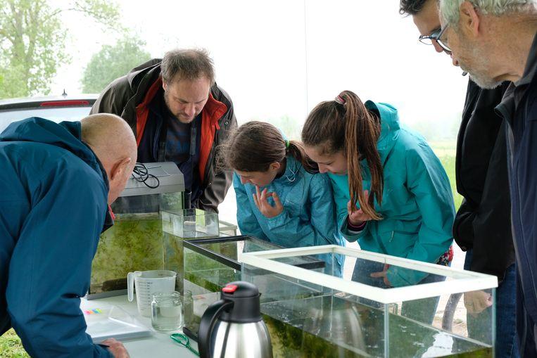 Op zoek naar fauna en flora in de Kalkense Meersen
