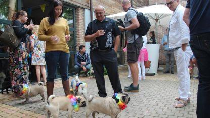 130 mopshondjes op eerste 'pug-party'