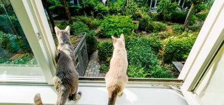 Westervoort is klaar met kattenoverlast