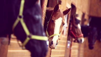 Jaarmarkt met paarden en kinderrommelmarkt