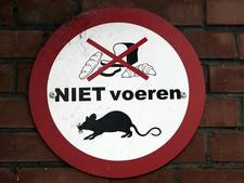 Nieuw wapen tegen rattenoverlast: de broodkliko