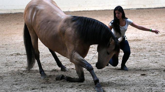 Tiende editie Paardendag lokt honderden nieuwsgierigen