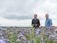 Iets meer betalen voor de bloemkool maakt de wereld  biodivers en kleurig