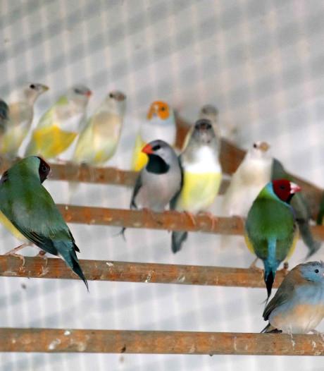 Verdachte handelaren illegale vogels blijven ontkennen: 'We willen voorkomen dat de dieren verdwijnen'
