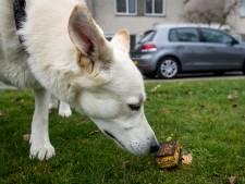 Gebakken sponzen gevonden in Goudse Hout: 'Levensgevaarlijk voor honden'