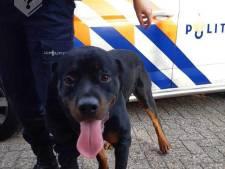 Man berooft vrouw (71) van haar tasje in Veenendaal