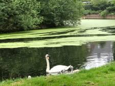 Dode vissen en watervogels in vijver Vught; mogelijk sprake van botulisme