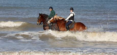 West-Zeeuws-Vlaamse kust krijgt ruiterpaden, gemeente gaat ook de strijd met paardenpoep aan