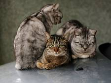 Persoonlijk drama dreigt: vrouw met acht katten mogelijk op straat gezet