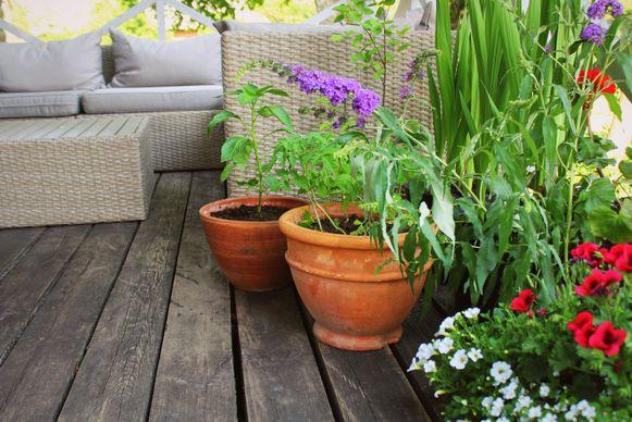 Korenbloemen en klaprozen lijken misschien leuk in een pot, maar zijn wel na drie weken uitgebloeid