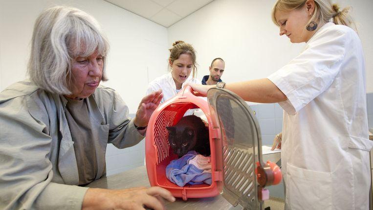De Thuisdierendokter is een uitkomst voor mensen wiens huisdieren niet in plastic mandjes vervoerd willen worden. Beeld ANP