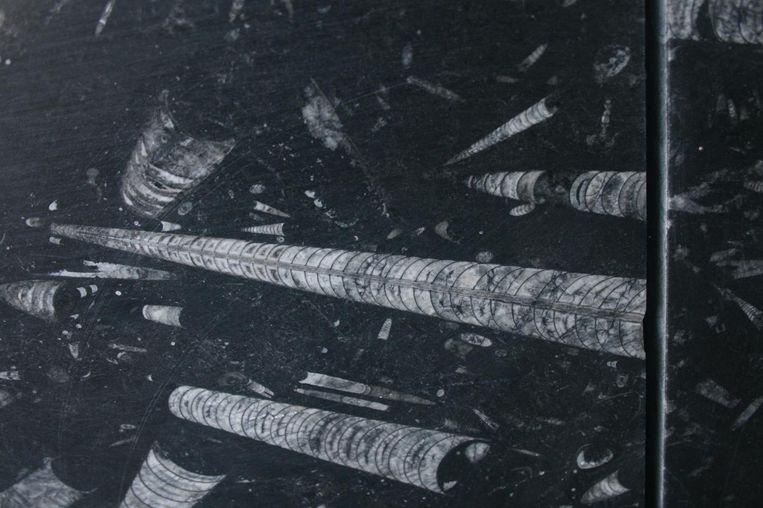 Een fossiel. Beeld Jelle Reumer
