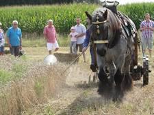 Trekkertrek en Boerendag in Vessem