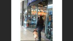 VIDEO: Snuggere blindengeleidehond begeleidt zijn baasje altijd recht de hondenwinkel binnen