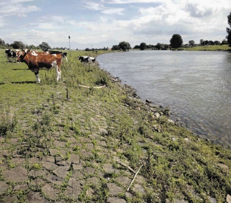 Ook de oever van de IJssel bij Rheden werd vanaf de jaren zestig voorzien van breuksteen. (FOTO KOEN VERHEIJDEN) Beeld