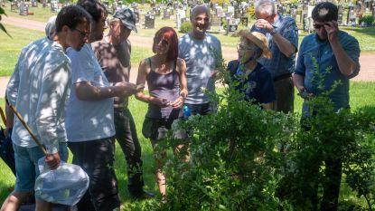 Op zoek naar beestjes op centrale begraafplaats van Wetteren