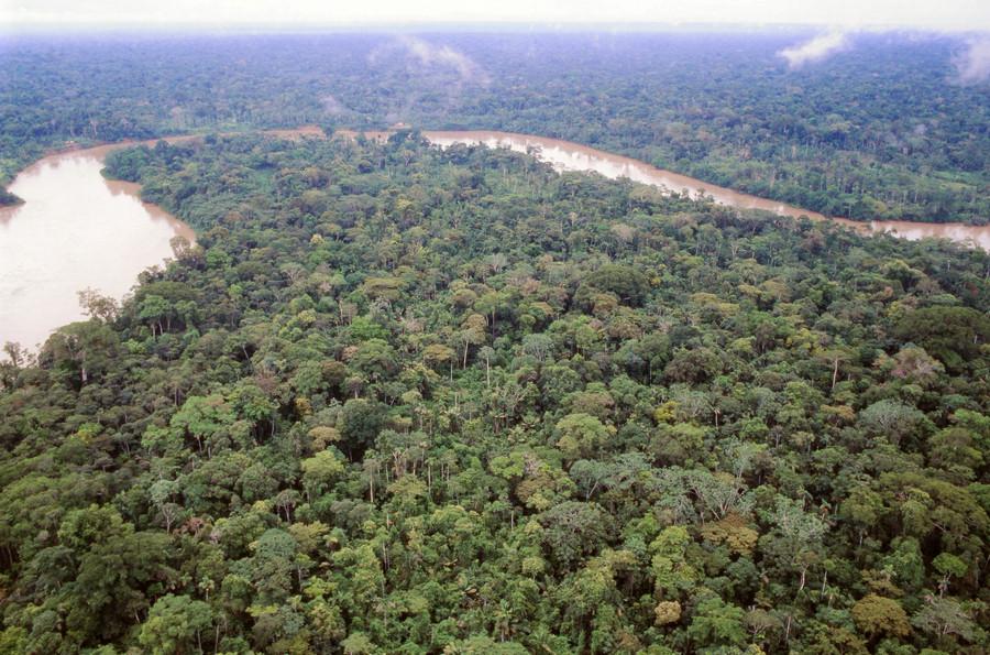 Ecuadoraans regenwoud.