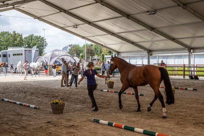 De medische keuring van de wedstrijdpaarden voor het  hippische concours op het terrein van Jan Tops in Valkenswaard.