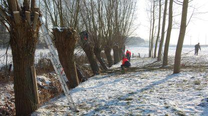 Regionaal Landschap Schelde-Durme zet boomknotters in