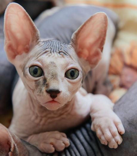 Lelijke (maar super lieve) huisdieren gezocht voor de fotogalerij!