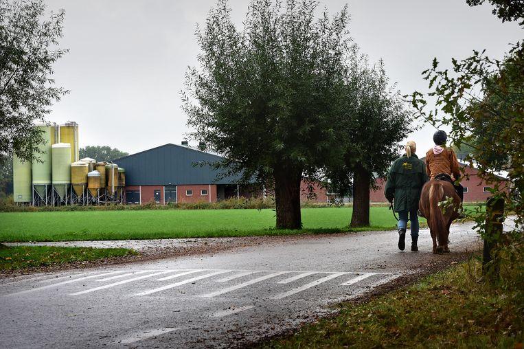 Een veehouderij in het Brabantse Peel. Beeld Marcel van den Bergh / de Volkskrant