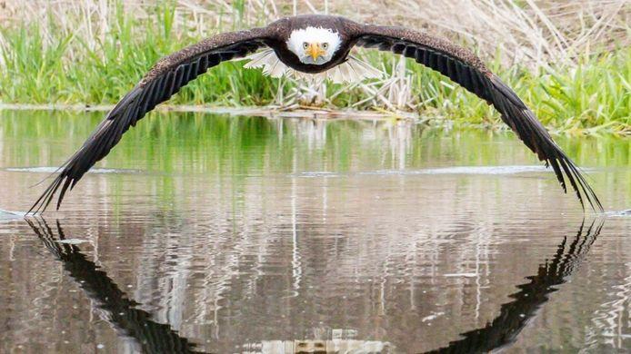 De foto van amateurfotograaf Steve Biro die viral ging.