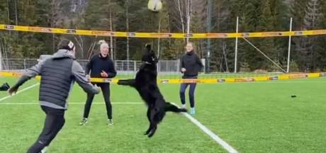 Ce chien est une star du volley-ball