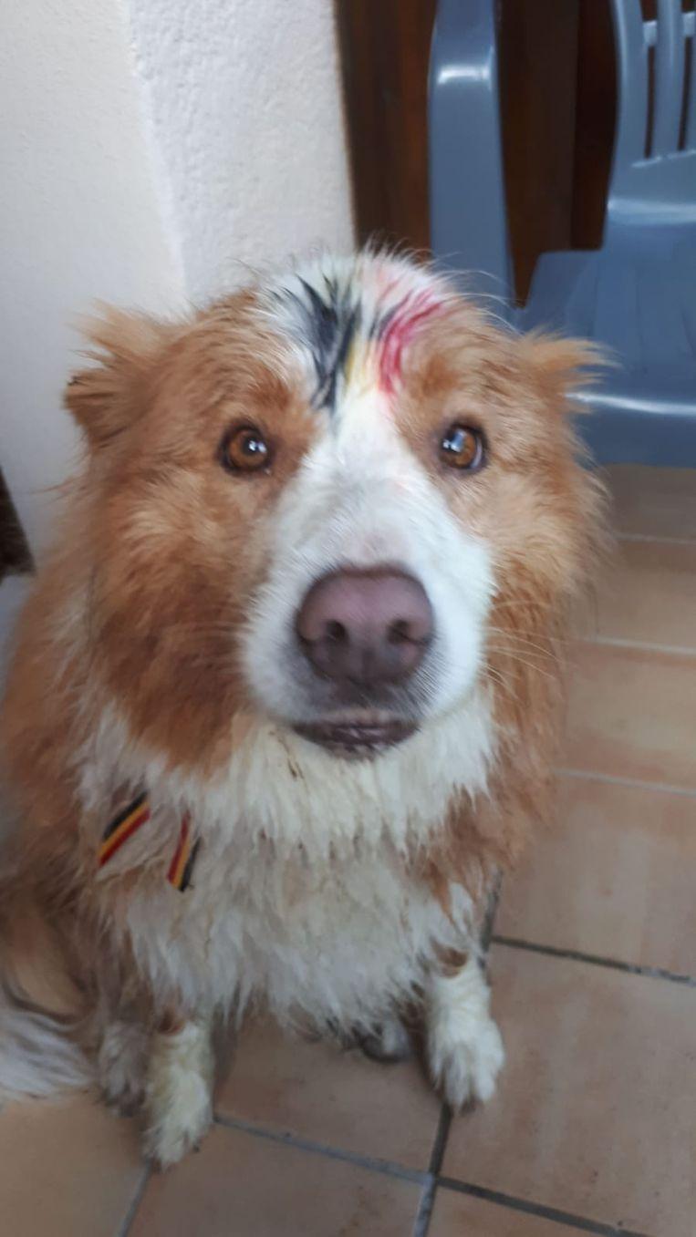 Wim Van Lancker en Elisabeth Van den Brande hebben hun hond in Lasalle ook Belgisch gekleurd.