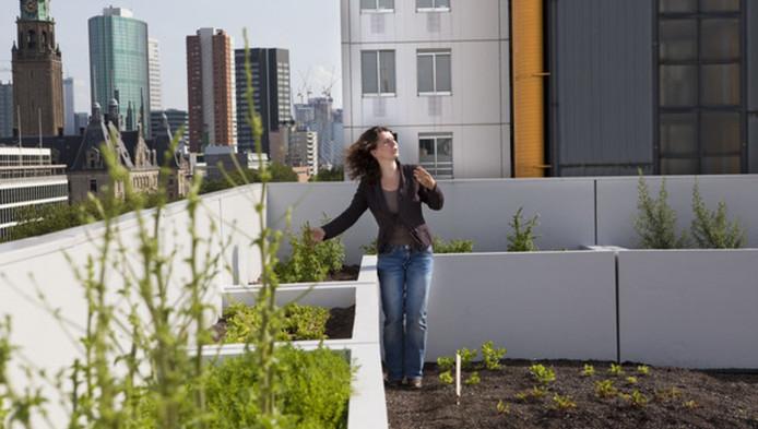 Stadslandbouw, zoals hier in Rotterdam, zou in Nieuwegein niet rendabel zijn.