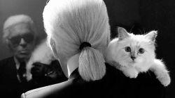 Bijna 1 jaar na de dood van baasje Karl Lagerfeld: hoe gaat het met zijn kat Choupette?