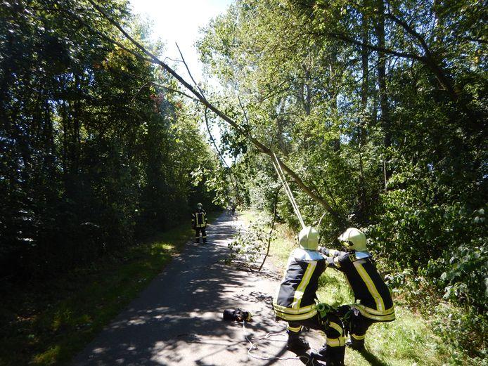 Brandweervrijwilligers trekken de boom in de goede valrichting, terwijl een collega met een motorzaag de stam onderhanden neemt.
