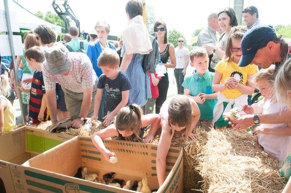 Altijd een succesnummer: de kinderboerderij