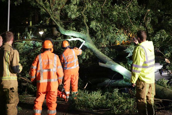 Onder andere op de Meppelweg viel een boom om en kwam op een geparkeerde auto terecht.