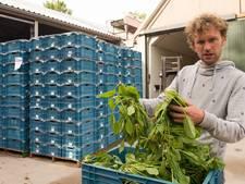 Afgekeurde spinazie van topkwaliteit uit Ens wordt gratis uitgedeeld