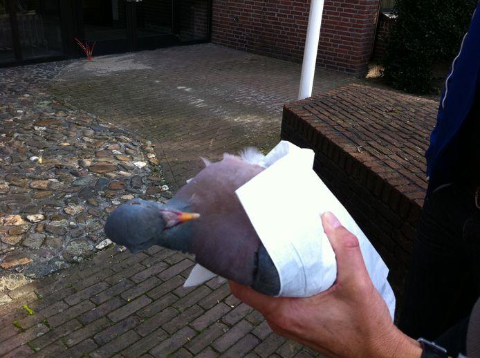 Vondst van dode duif.