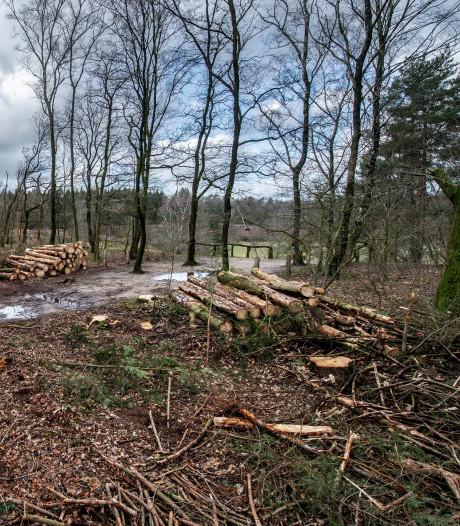 De letterzetter vernielt honderden naaldbomen: 'Als de bomen droger worden, kan de kever zijn gang gaan'