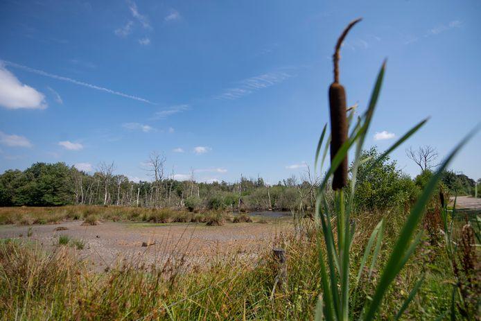 Natuurgebied Zunasche Heide is te nat. Provincie en waterschap Vechtstromen nemen maatregelen.