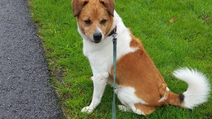 Hond Joep na overlijden baasje op het laatste moment gered van spuitje