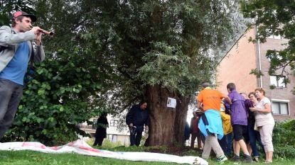 """""""Laat onze Gaston staan, alsjeblieft"""": Jetse buurt in opstand tegen kap van meer dan 100 jaar oude wilg"""