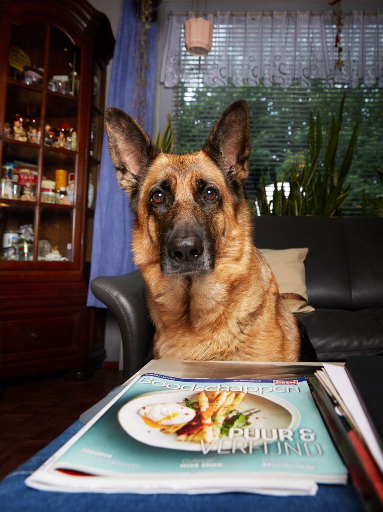 Jill (6) Duitse herder, Van der Pekbuurt. Beeld Isabella Rozendaal
