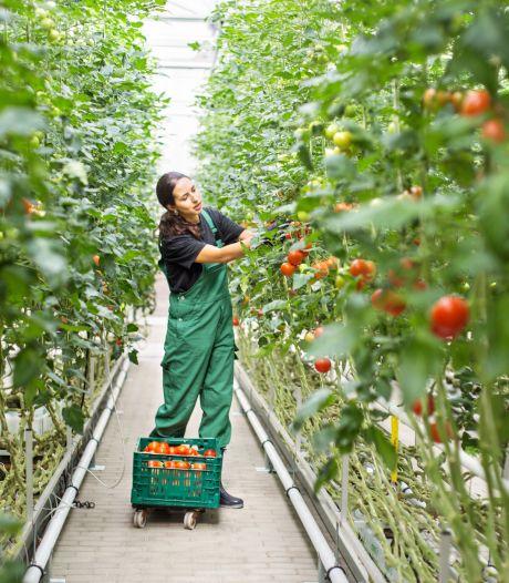 Boeren willen meer arbeidsmigranten naar Nederland halen, ook van buiten de EU