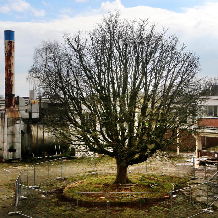 Op het terrein van de oude Kerry-fabriek aan de Ettensebaan in Breda kan een nieuw woonwijkje komen. De oude fabriek is al deels gesloopt maar de oude monumentale Paardenkastanje) blijft staan.
