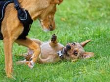 Al jaren bron van ergernis, toch maar één boete voor hondendrollen in Gouda: 'Dit is wel heel weinig'
