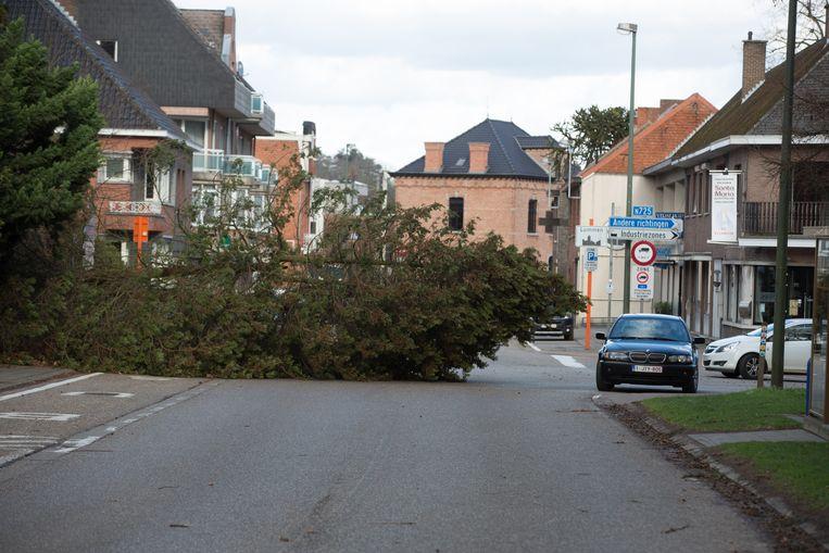 Omgevallen boom in de kerkstraat in Lummen