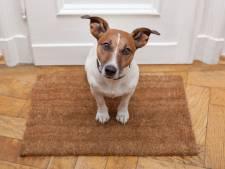 Hondenbelasting in Losser moet naar nul: 'Halvering is niet voldoende'