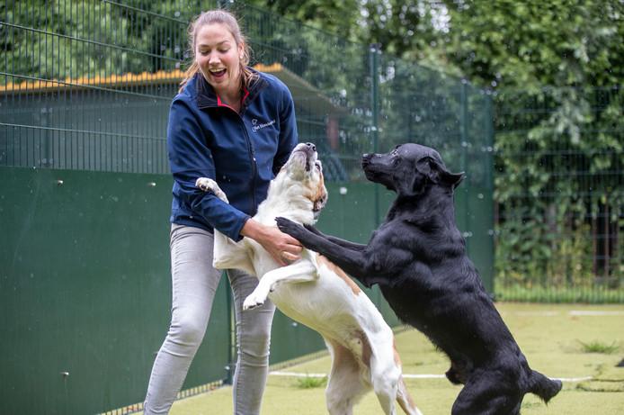 Jolanda van Leijen van Het Hondenhotel in Rhenen.